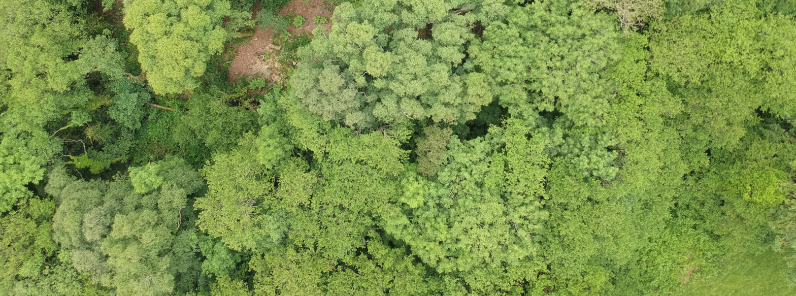 Aerial shot of Alderwood forest from drone